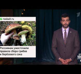 Новые правила сбора грибов и ягод. Гнойный идет в Госдуму. Армия и наркотики. Вечерний Ургант.